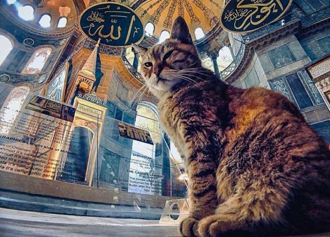 Hagia Sophia Gli cat kucing